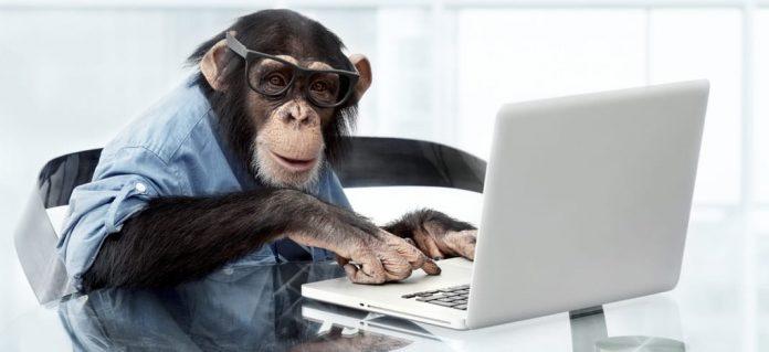 pay peanuts get monkeys wilma vervoort content schrijven hoeveel kost een blog
