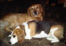 WIlma Vervoort-Tekstschrijver-Content Schrijven-Huisdierenoppas aan huis-2