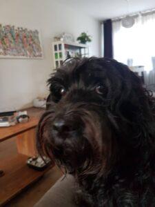 WIlma Vervoort-Tekstschrijver-Content Schrijven-Huisdierenoppas aan huis-4