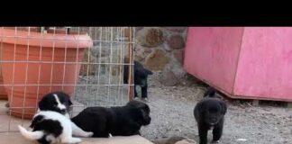 wilma vervoort-tekstschrijver-content schrijven-huisdierenoppasaanhuis-overdosis puppy schattigheid