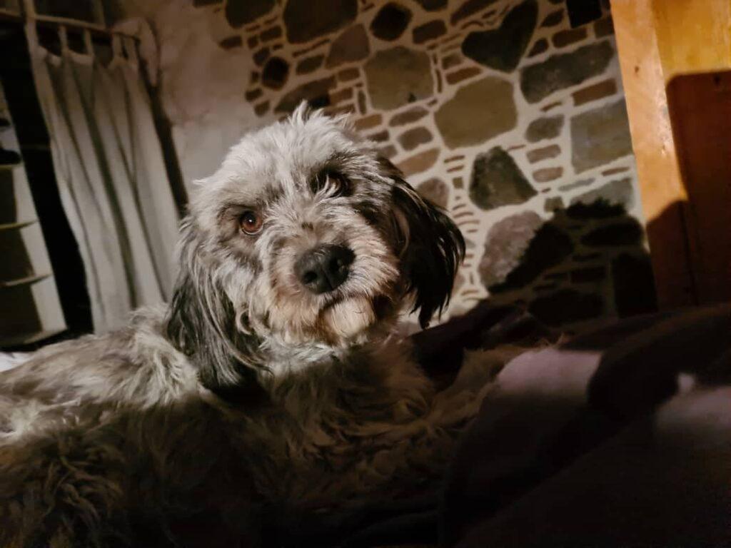 wilma vervoort-tekstschrijver-content schrijven-huisdierenoppasaanhuis-miridaki
