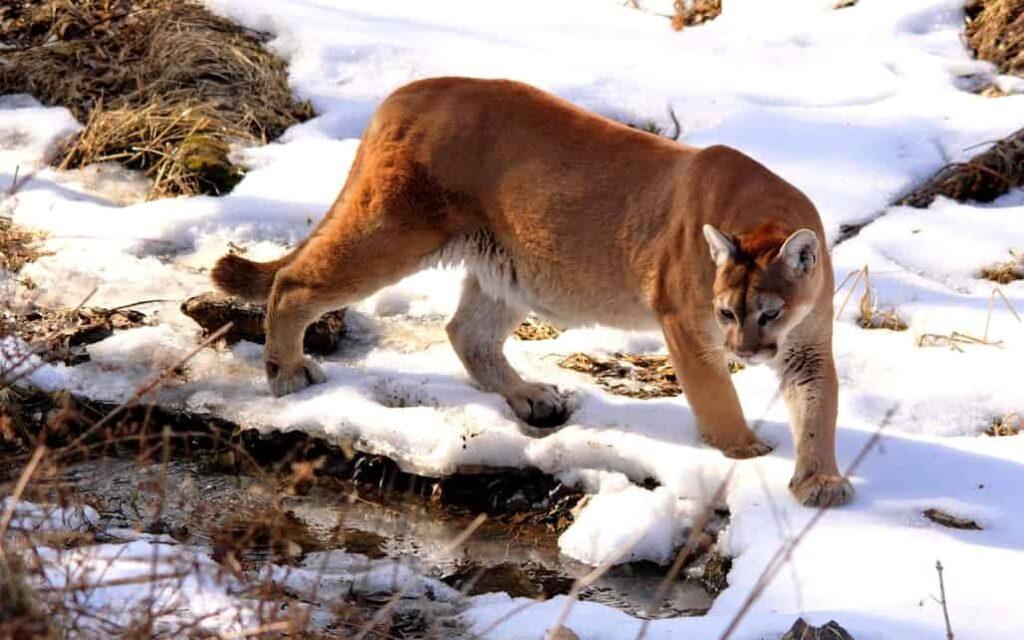 inandoutofafrica-wilmavervoort-tekstschrijver-interactive acts-menopause nomad-menopause magician-power of the pen-cougar