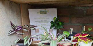 InAndOutOfAfrica-Menopause Nomad-Wilma Vervoort-Tekstschrijver-Power of the pen-Menopause Magician-Interactive Acts-Plantenbieb Best 1